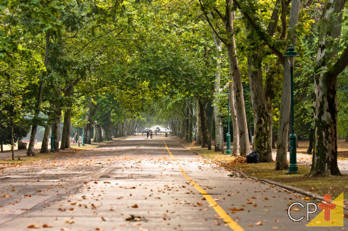 Vantagens da arborização urbana