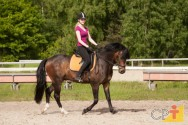 Cavalos: doma racional interativa e imprinting trainning