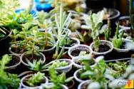 Guia para cultivar suculentas em casa