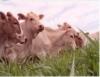Evento evidencia o destaque da pecuária brasileira