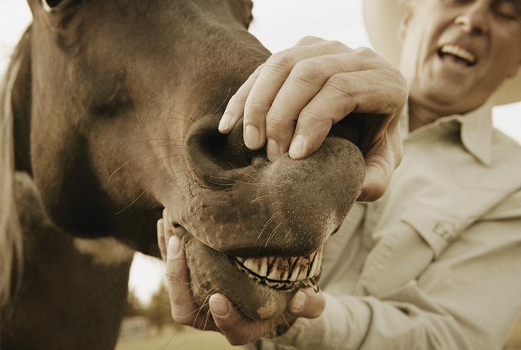Boca de cavalo