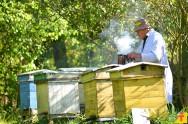 Dicas de alimentadores para abelhas