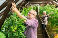 Cultivo de produtos orgânicos em sítios e chácaras