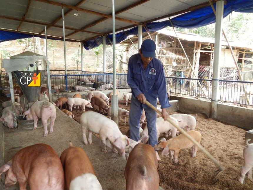 Criação de suínos em camas sobrepostas: espessura e revolvimento da cama   Artigos Cursos CPT