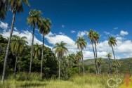 Vai plantar coco macaúba? Antes veja essas orientações