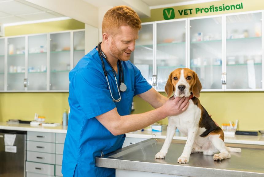 Como avaliar o esôfago de um cão? Com inspeção e palpação!   Artigos Cursos VetProfissional