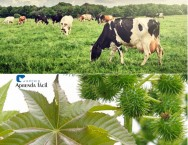 Descubra quais plantas são tóxicas para o gado