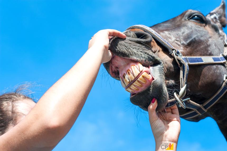 Especialidade em veterinária? Faça odontologia equina!   Notícias Cursos CPT