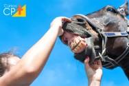 Como prevenir problemas odontológicos em equinos