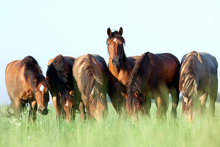 Cavalos - imagem ilustrativa