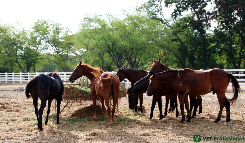 Precisando avaliar cavalos? Observe-os em grupo, não isoladamente   Artigos VetProfissional