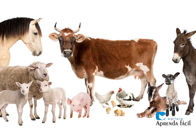 Criações de animais - imagem ilustrativa