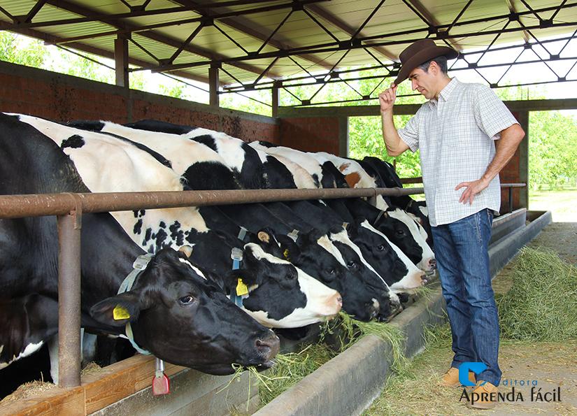 Gado de leite - Imagem ilustrativa