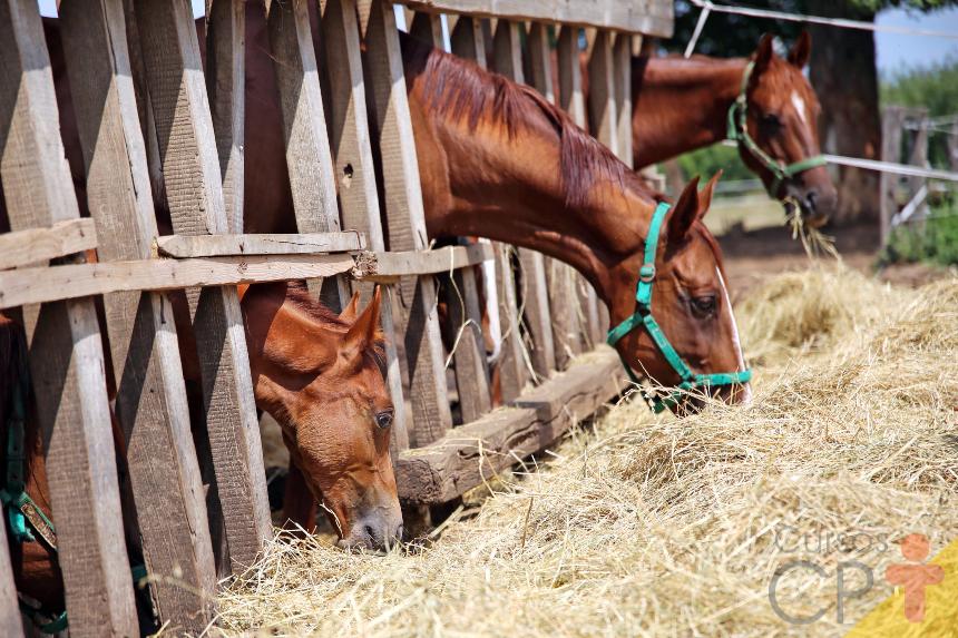 Estudando cavalos? Aprenda sobre o ciclo mastigatório dos equinos   Artigos Cursos CPT