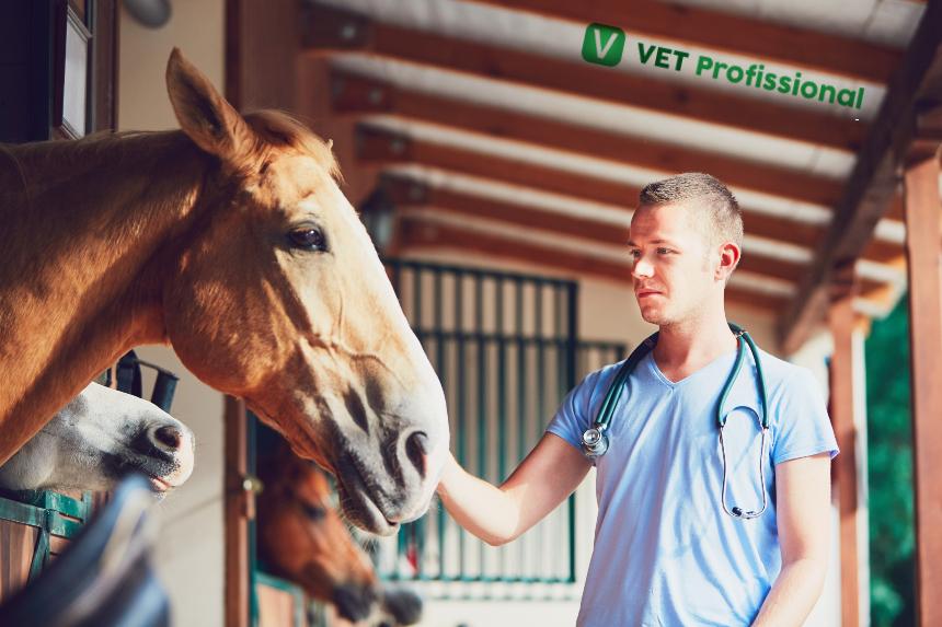 Precisando aferir a frequência cardíaca em equinos?   Artigos VetProfissional