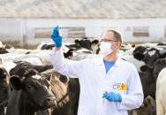 Tuberculose bovina: incurável, contagiosa e um perigo de saúde pública