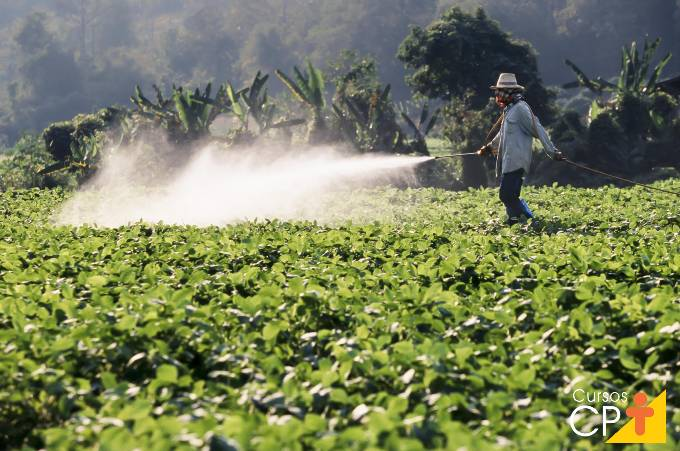 6 pragas inimigas do agronegócio