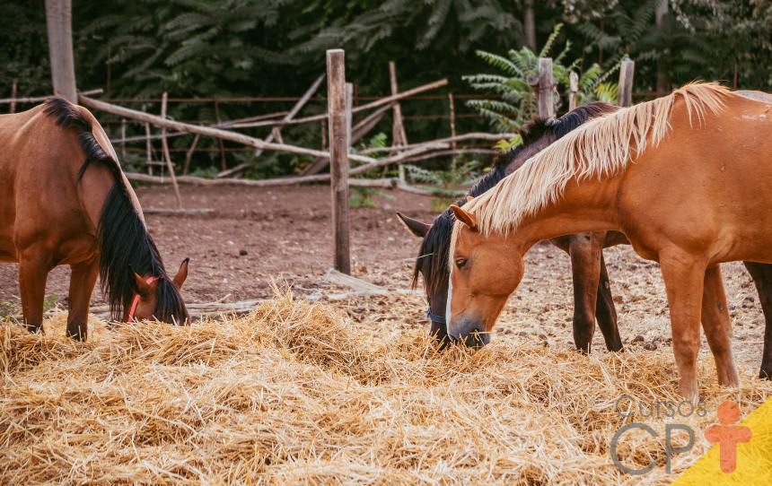 Mastigação: primeira etapa da digestão de equinos   Artigos Cursos CPT