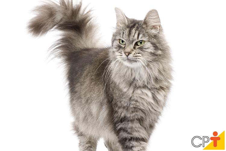 Gato - imagem ilustrativa