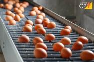 4 perguntas e respostas sobre incubação de ovos