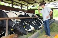 Melhore a eficiência alimentar do gado leiteiro