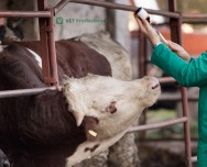 Veterinário, entenda o que diz a IN 77 sobre a parasitose em gado leiteiro