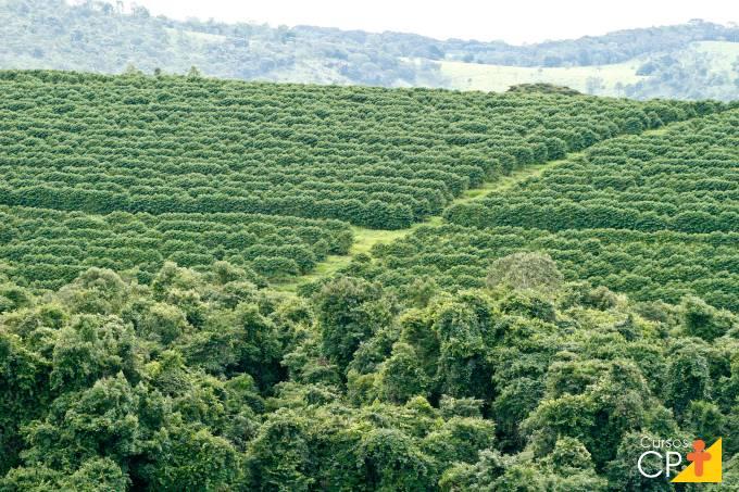Aprenda agora como otimizar a gestão da lavoura de café