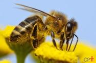 Principais inimigos das abelhas