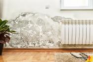 Conheça truques para remover as principais manchas da sua casa