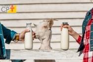 Dicas importantes para produzir leite de cabra de qualidade