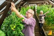 Como fazer o controle da pinta-preta em tomateiros