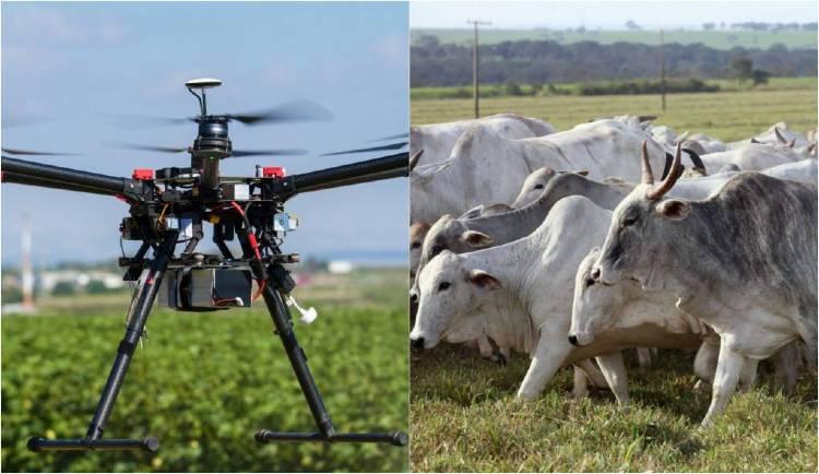 Uso de Vants (drones) na contagem do gado