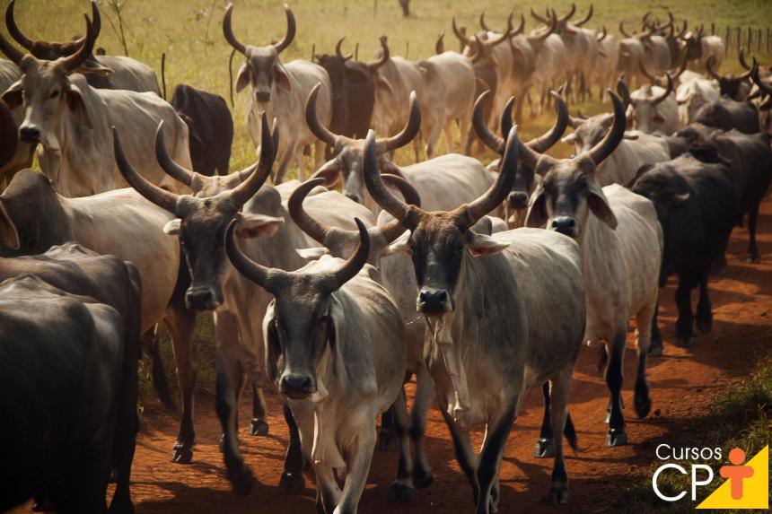Uma planta tóxica que mata subitamente o gado? Café do mato!   Artigos CPT