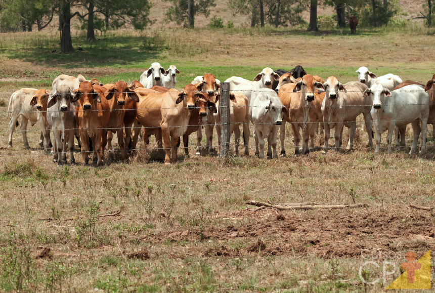 Sabe o que leva o gado à intoxicação por plantas? Falta de alimentos!   Artigos Cursos CPT