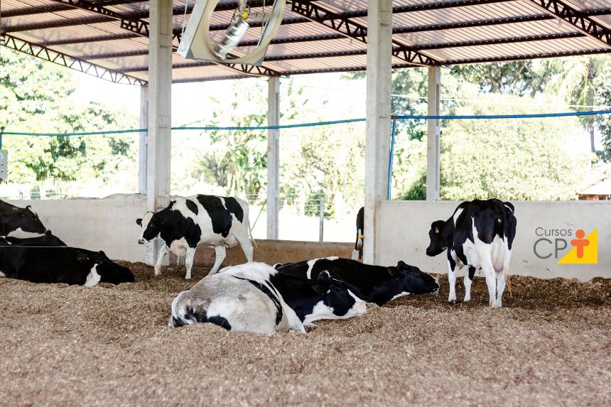 Conforto térmico bovino, você sabe o que é e como estipular?   Artigos Cursos CPT