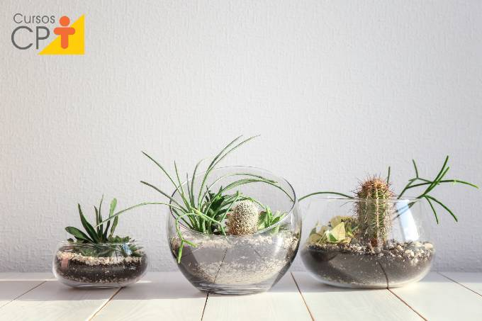 Como cultivar cactos em casa de forma simples e fácil
