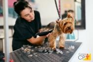 Conheça os principais tipos de tosa em cães