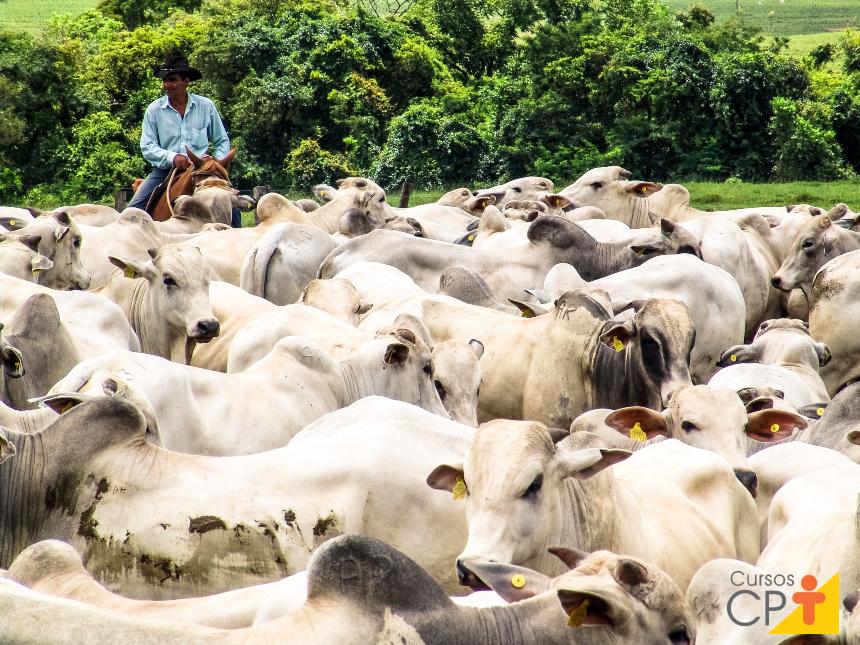 Taxa de reposição de touros e vacas. O que isso significa e por que fazer?   Artigos CPT