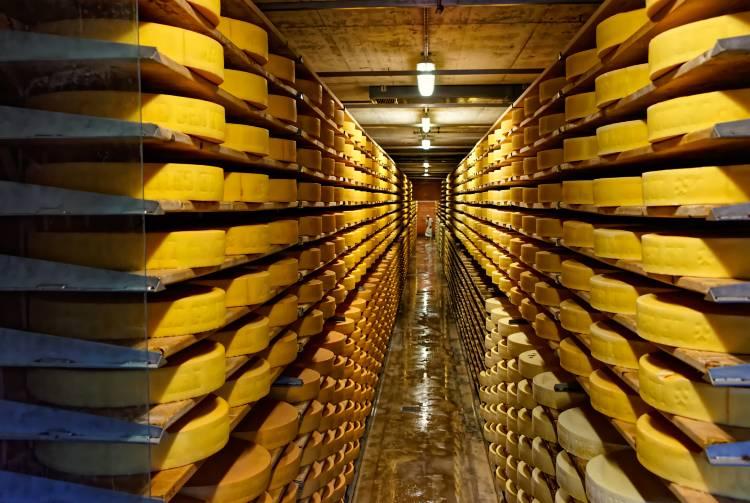 Miniguia fácil para montar uma queijaria de sucesso