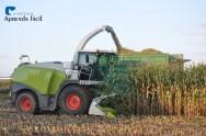 3 formas de otimizar a colheita mecanizada do milho