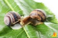 Os segredos para uma criação de escargots de sucesso