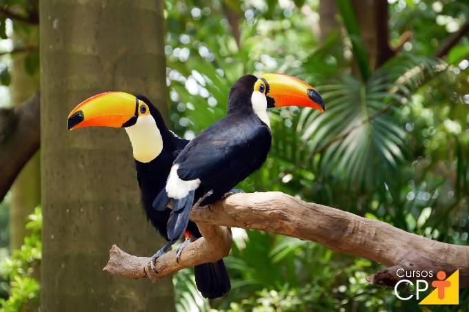 6 dicas fáceis para criar tucanos