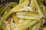 Utilização do bagaço da cana-de-açúcar na alimentação do gado