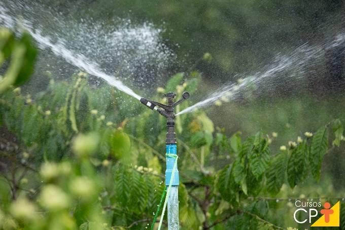 3 principais tipos de irrigação do cafeeiro