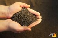 Como coletar amostras do solo para análise em laboratório