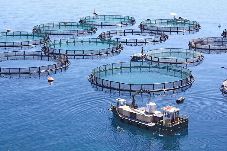 Tanques para a piscicultura - imagem ilustrativa