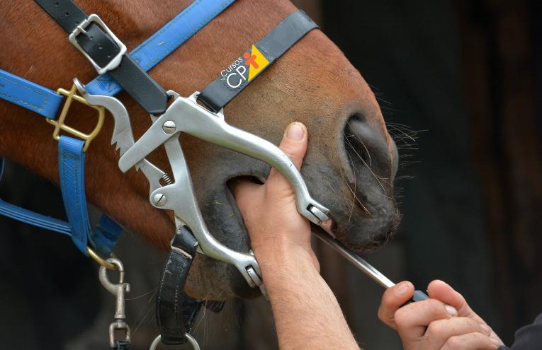 Dicas essenciais para a realização de procedimentos odontológicos em equinos   CPT