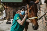 Avaliações preliminares odontológicas em equídeos. O que considerar?