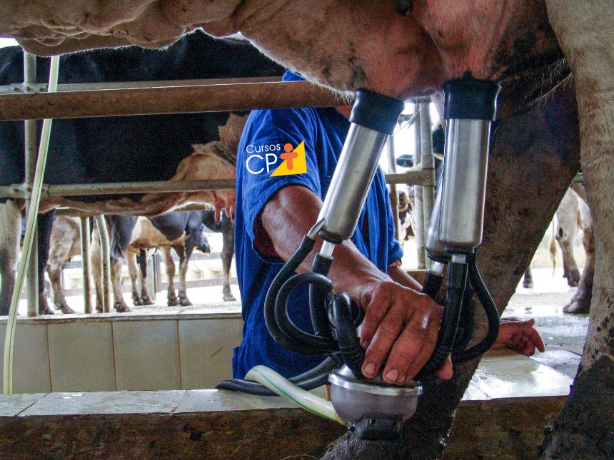 CBT do leite: o que é isso e qual sua importância?   Artigos Cursos CPT