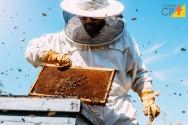 4 dicas importantes sobre a colheita do mel